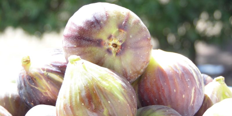 Fig fruit nutritional value