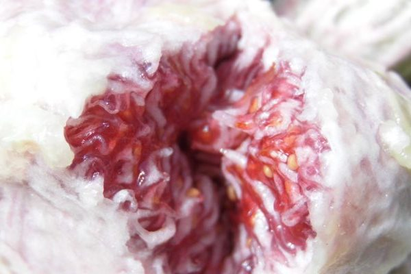 Fig skin benefits