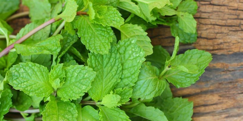 Mint skin benefits