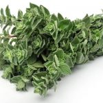 Oregano and its cosmetic uses