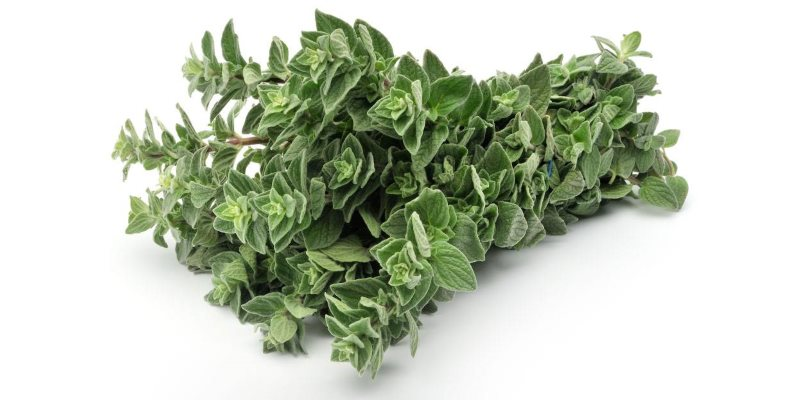 Oregano skin benefits
