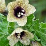 Δηλητηριώδη Φυτά και Βότανα Ι Μέρος 1ο