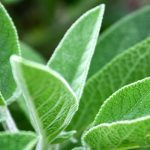 Sage and cosmetic properties