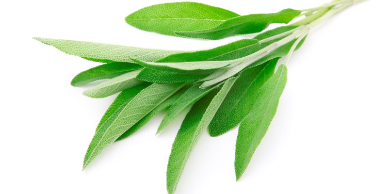 Sage health benefits