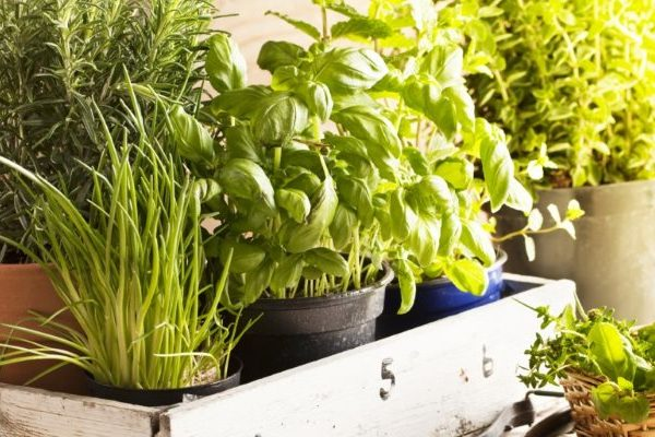 How to safely use herbs