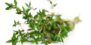 Thyme skin and hair benefits