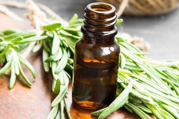 Herbs for headache