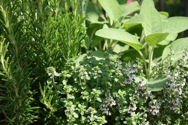 Herbs for sore throat