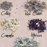 Βότανα: Επεξήγηση Βασικών Όρων
