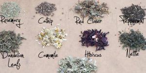 Terms of herbal medicines