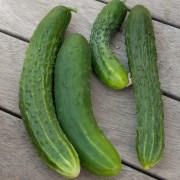 αγγούρι cucumber