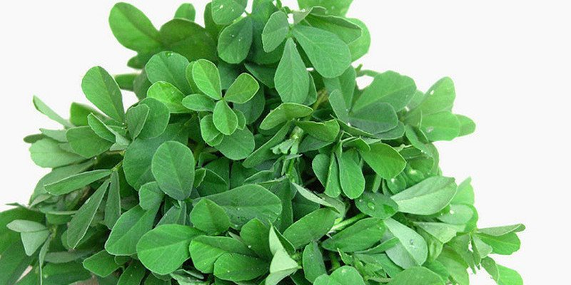 Fenugreek nutritional value