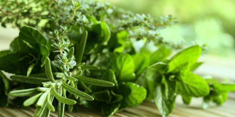 Stimulating herbs