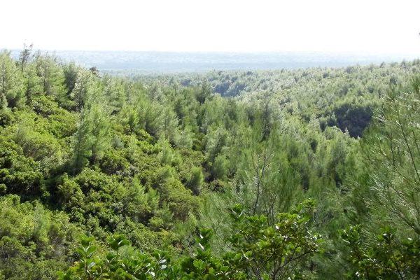 Mount Parnitha herbs
