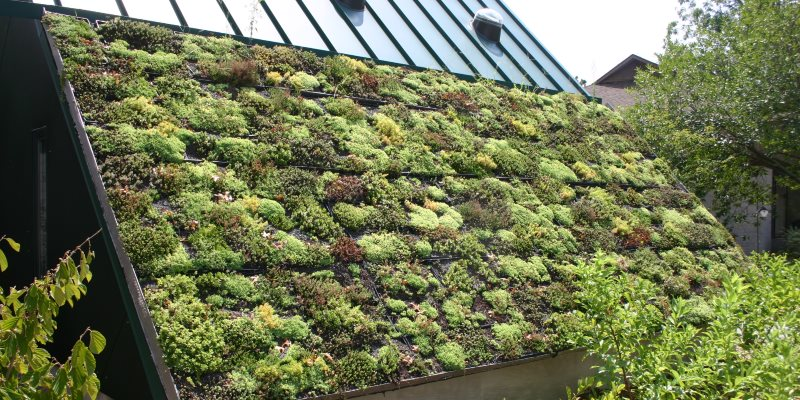 Ecology - green roofs