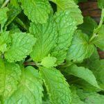 Herbs for fresh breath!