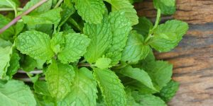 Herbs for fresh breath