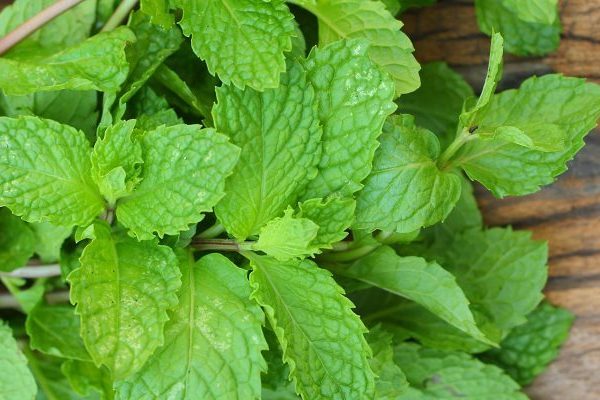 Herbs for fresh breath