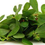 Αντράκλα – Portulaca oleracea