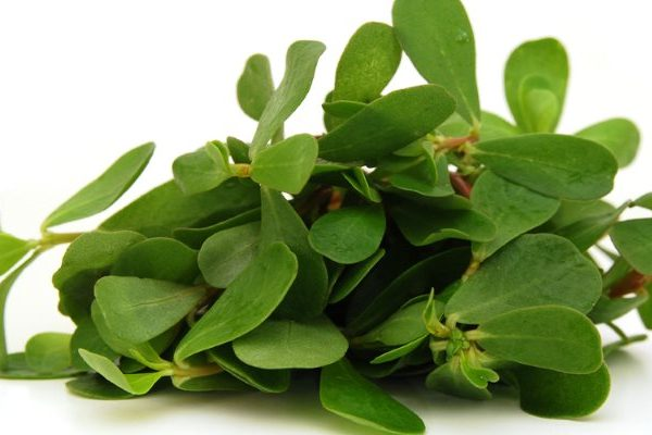 Purslane medicinal uses