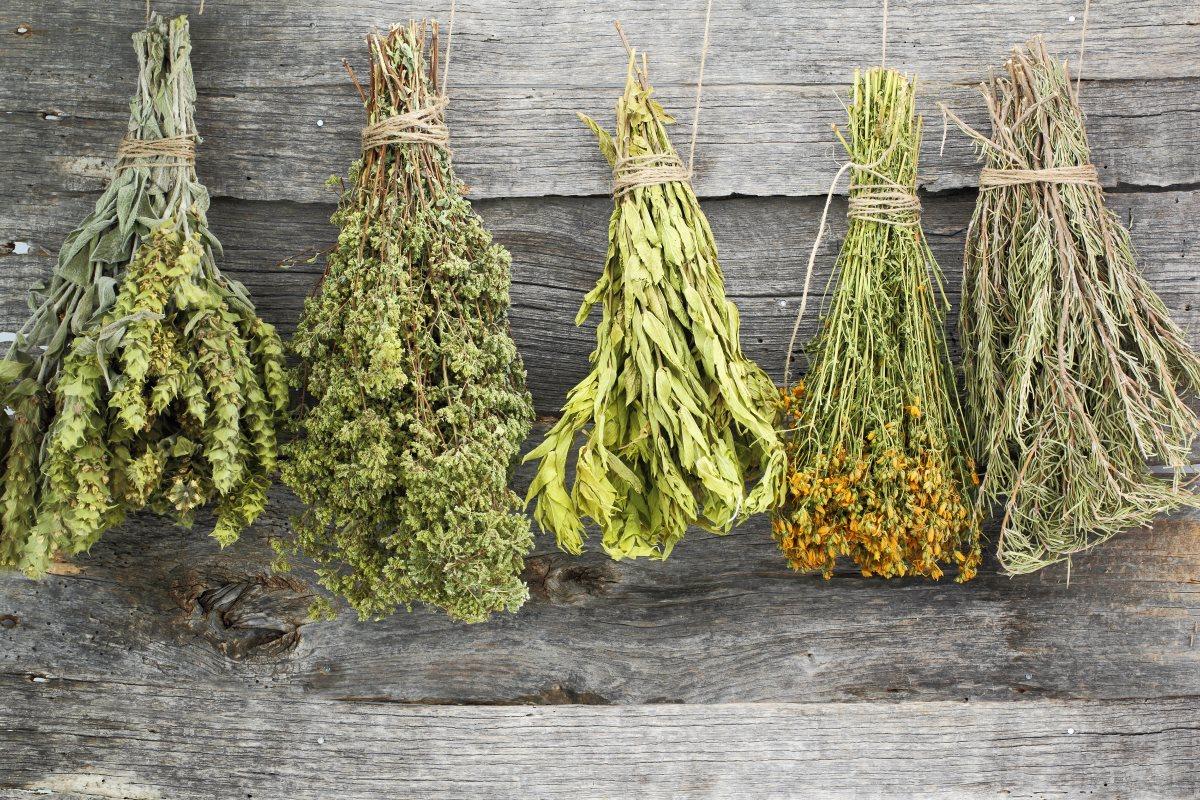 Herbs healing properties