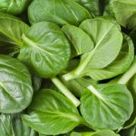 Spinach nutrition facts and cultivation