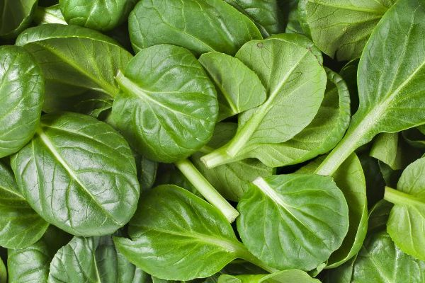 Spinach skin benefits