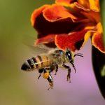 Bee feeding herbs