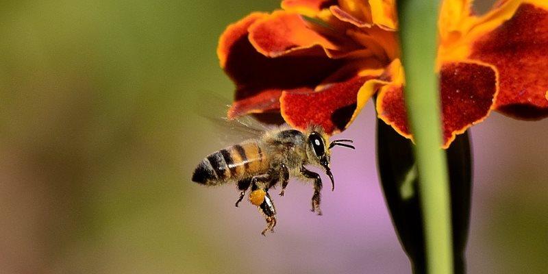 bee feeding plants
