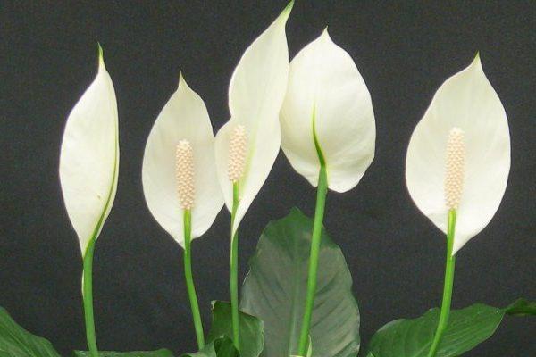 Interior plants that clean the air