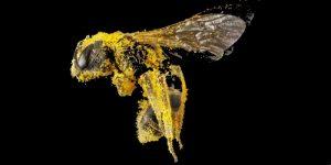 Bee pollen nutritional value