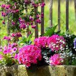 The secrets of a perfect botanical garden