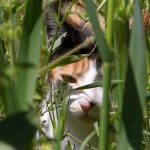 The magical effect of catnip on cats