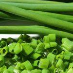 Σχοινόπρασο – Allium schoenoprasum