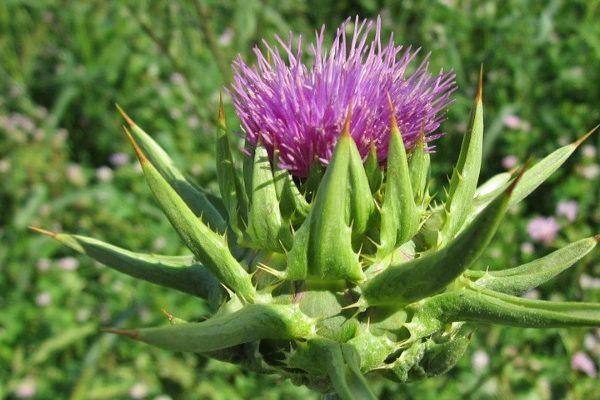 Best detoxifying herbs