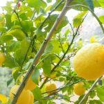 Λεμόνι θρεπτικά συστατικά