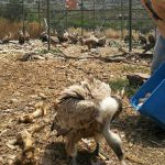 Άνιμα – προσπάθεια σωτηρίας για 180 ζώα