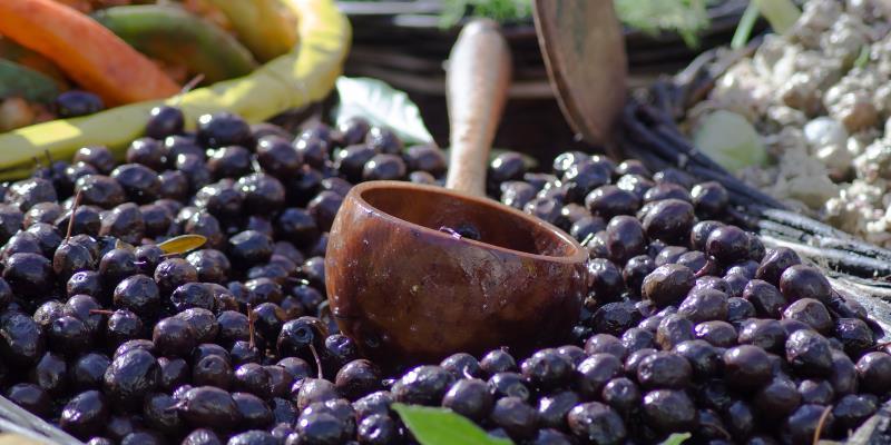 Αφιέρωμα στην ελιά – μέρος 2ο θεραπευτικές ιδιότητες, καλλιέργεια, συγκομιδή